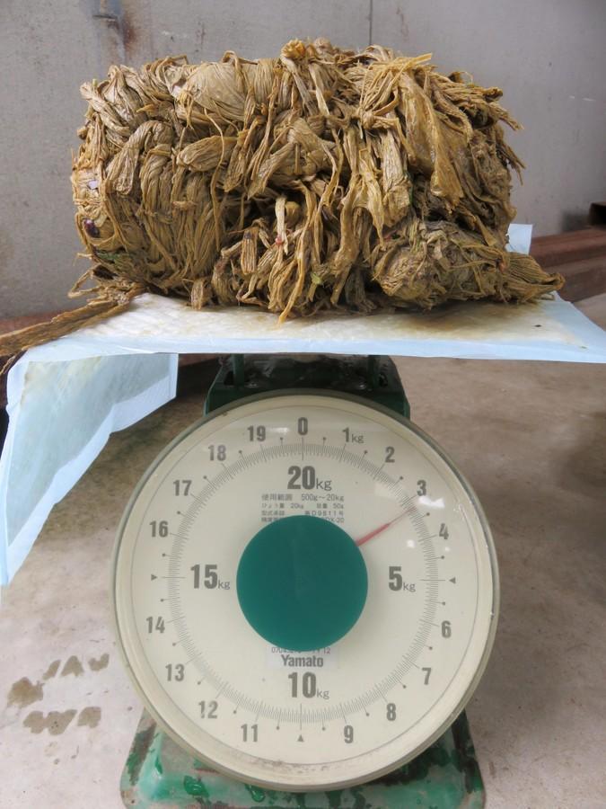 奈良鹿接连死亡 解剖发现胃里的塑料袋拧成硬块