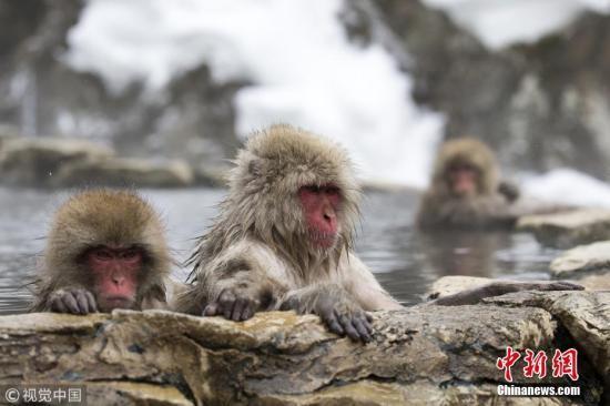 青山不老课件(09伍声非诚勿扰)日动物园一猕猴失踪9日后寻回 园长:它在检讨