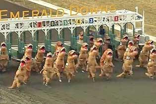 """美""""霸王龙""""赛跑 25名选手争夺""""最快霸王龙"""""""