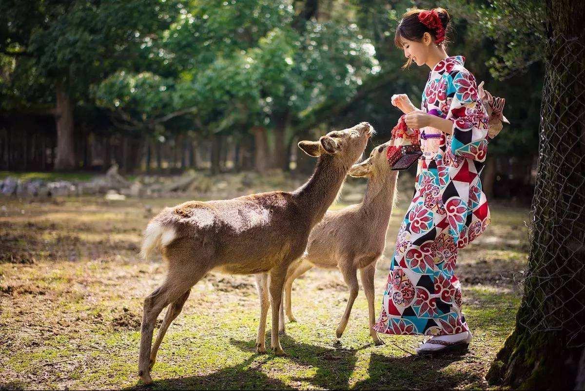 日本奈良公园9只鹿因吞下塑料袋惨死 或因游客激增