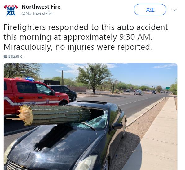 美司机驾跑车撞上巨大仙人掌 挡风玻璃被刺穿