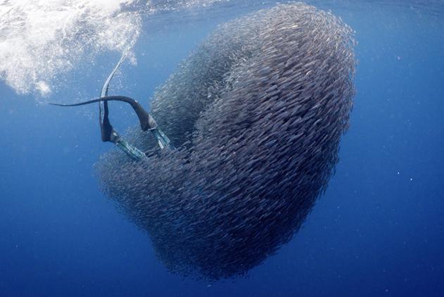 """自由潜水员出海追鲨 巧遇""""鱼群旋涡""""瞬间被吞没"""