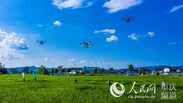 梁平:植保无人机防治水稻病虫害
