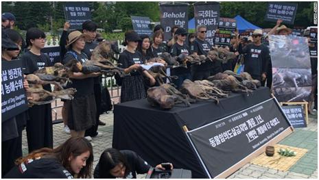 指南针全能网络电视(有氧健身操)当着动物维护人士的面,韩国狗肉业者大口吃狗肉