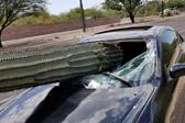 命大!巨大仙人掌被撞断插进汽车 司机只受轻伤
