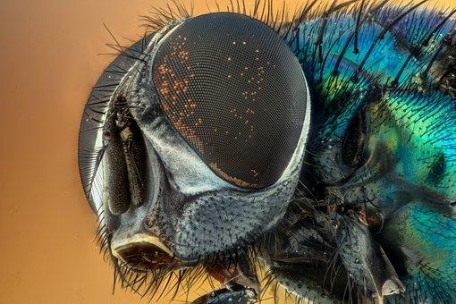 有证据表明:昆虫在受伤后会感到持续的疼痛