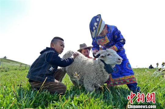 """甘肃肃南打造""""共享牧场"""" 传统农户""""触网""""牧羊"""