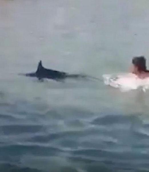 残忍!剑鱼游到海边产卵被游客投石砸死