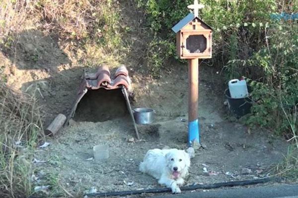 狗主人车祸去世 希腊一忠犬原地守候18个月