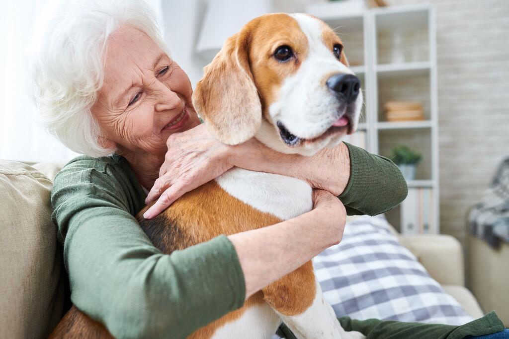法国心脏病协会称养狗有助于改善心血管疾病