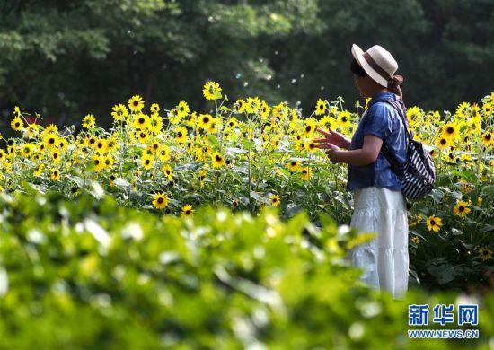 上海:暂别阴雨 游人赏花