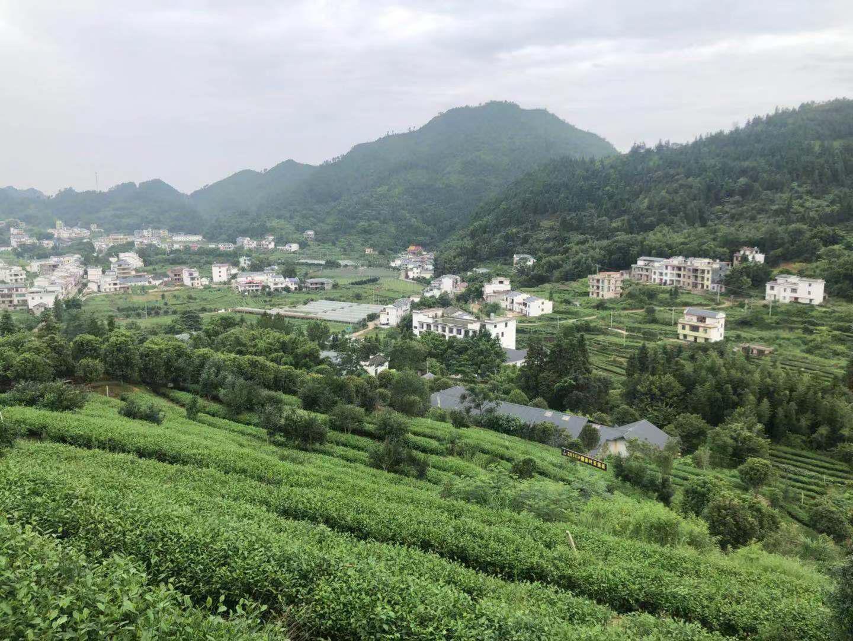 """看江西上犹县的绿色""""蝶变"""""""