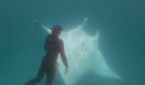 """潜水员水下遇""""魔鬼鱼""""求助 成功取出眼下鱼钩"""