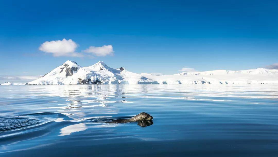 在南极赴一场最美的约会