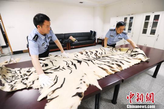 郑州海关查获走私孟加拉虎皮两张 抓获5名嫌疑人