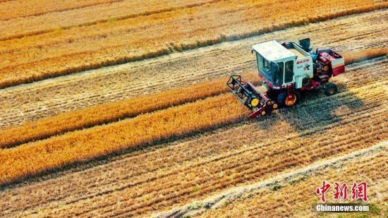 农业农村部:今年以来农产品供应有保障 市场运行平稳