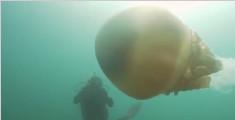 生物学家潜水偶遇巨型桶水母