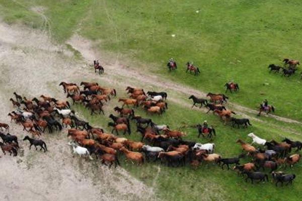 世界第一大马场山丹马场马匹成群奔跑在祁连山下
