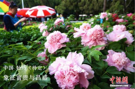 王子的约会汪东城(中华少年是一首什么诗)万花丛中过,独爱这一枝:你想知道的各国国花选美都在这!