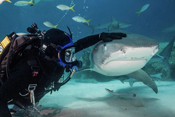 我的宠物是鲨鱼!美国男子和鲨鱼玩摸头杀同游