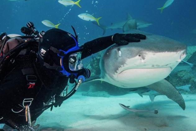 我的宠物是鲨鱼!美国男子和鲨鱼玩摸头杀超淡定