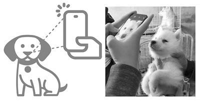 鼻纹识别让宠物拥有专属身份证