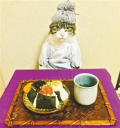 超级敬业 日本猫咪一心拍照不为美食所动