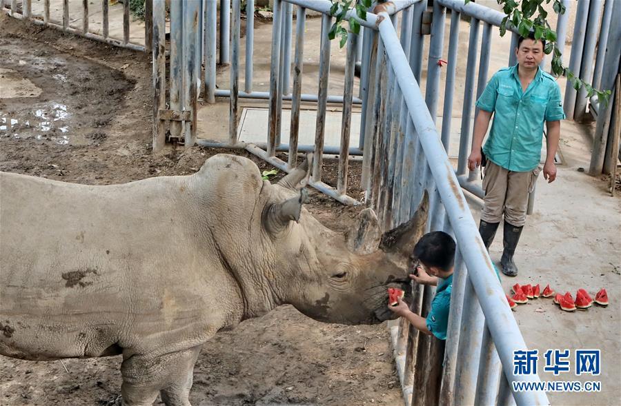 北京动物园:让动物清凉过三伏天