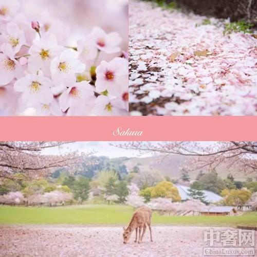 樱花季,伊藤限定美食将不负春日