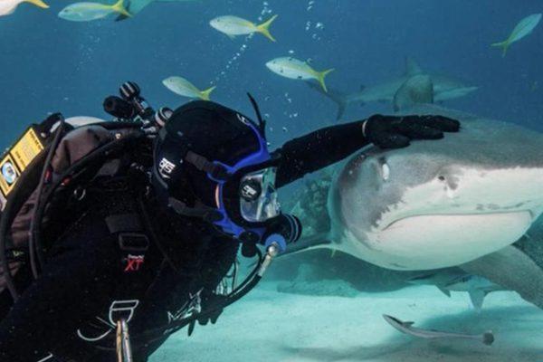 美国男子和鲨鱼玩摸头杀同游超淡定