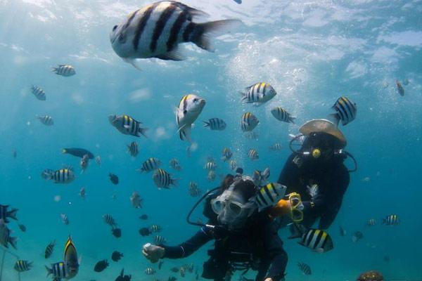 海南海洋专家分界洲岛海底移植珊瑚