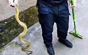 老人打扫院子 发现一米多长大蛇