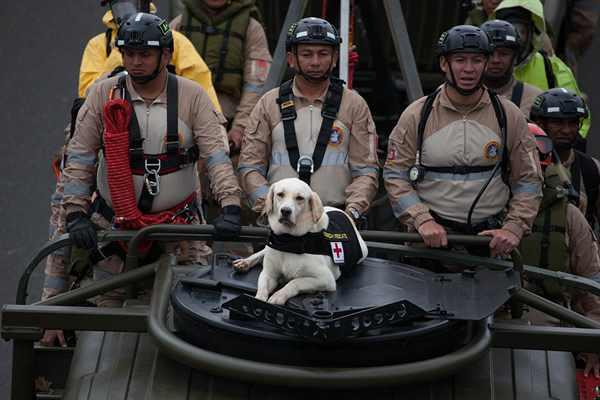 哥伦比亚举行盛大独立日阅兵式 军犬抢镜