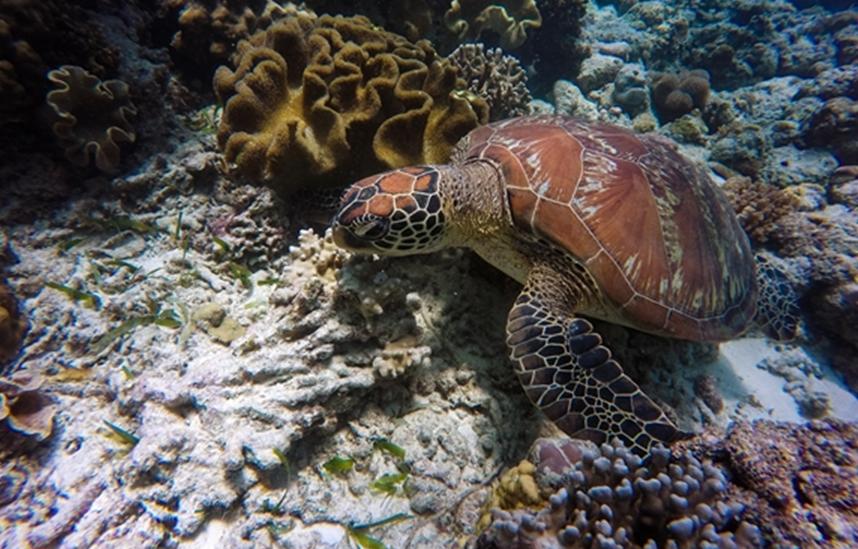 研究发现防晒霜对珊瑚礁有害
