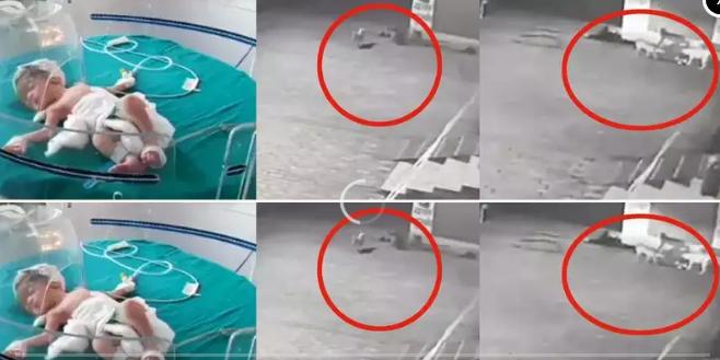 印度新生婴儿惨遭母亲遗弃 流浪狗从下水道里救了它的命