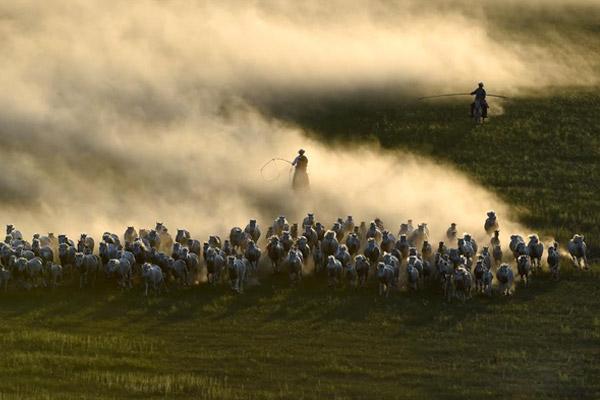 草原套马展示蒙古族独具风情的民俗文化