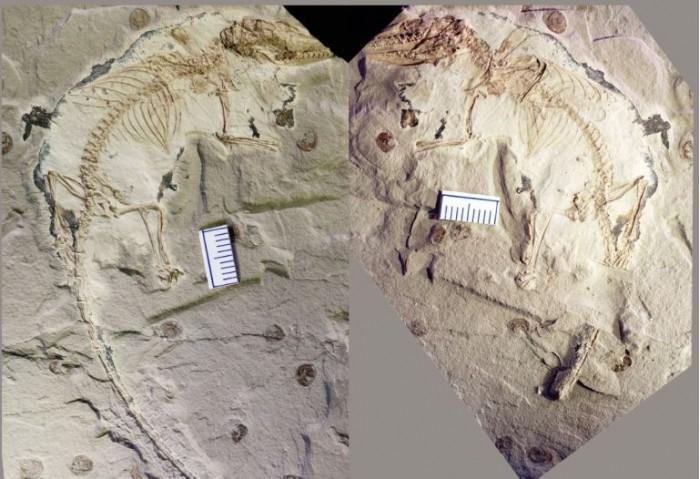 古代化石提供了哺乳动物何时学会咀嚼的线索