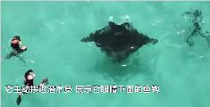 """澳潜水员水下遇""""魔鬼鱼""""求助"""