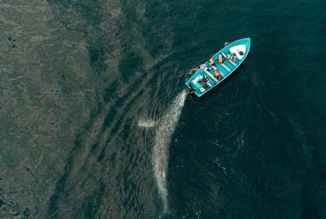 """墨西哥一条灰鲸邂逅游客 友好上前""""帮忙""""推船"""