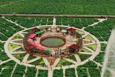 航拍江西石城百亩荷花园 吸引游客参观