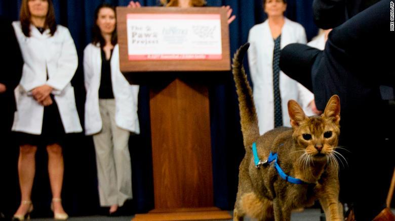 美国纽约州出台法案禁止给猫咪做除爪手术,州长签署了