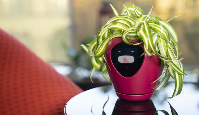 """欧洲团队发明智能盆栽让你轻松读懂植物""""心情"""""""