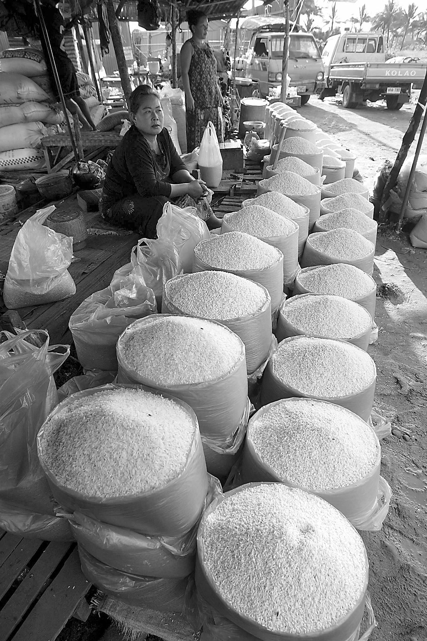 龙游天下潮语版头戴绿帽走江湖去老挝种水稻,有天时地利人和