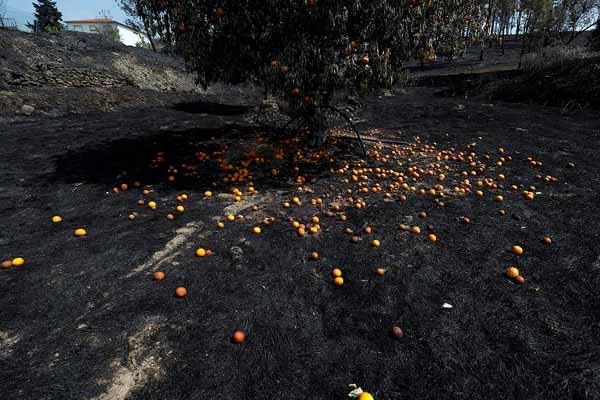 葡萄牙中部山火已致32人受伤 一男子涉嫌纵火被捕