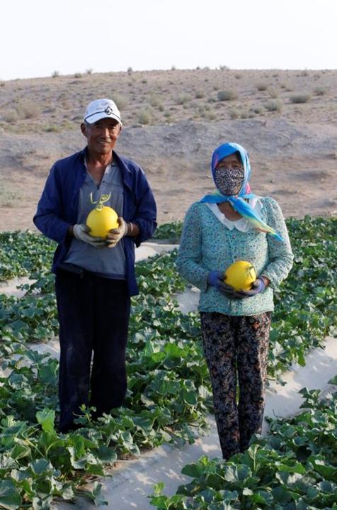 """阿里启动""""蜜瓜换树苗"""":4000亩沙漠将变绿洲"""