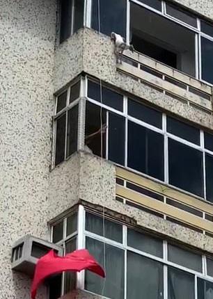 巴西一消防员下班后发现坠楼小狗 用防水布将其救下