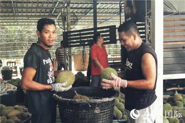 马来西亚官员:中国市场对马来西亚非常重要