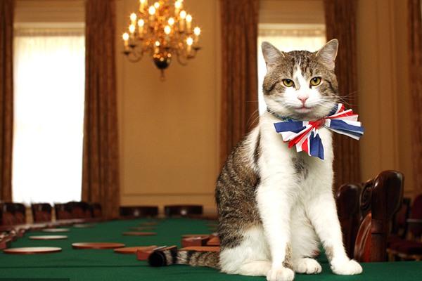 """流水的首相铁打的拉里 唐宁街""""首席捕鼠官""""又连任了"""