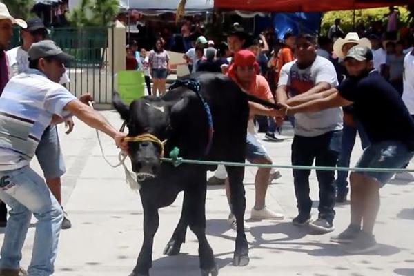 墨西哥村民为敬拜守护神 宰杀公牛生饮牛血