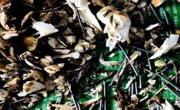 买两斤野生菌有60颗钢钉